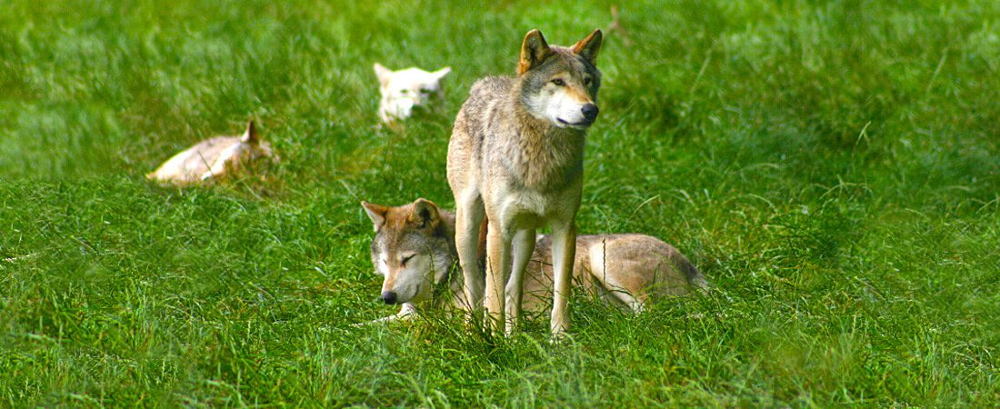 California Wolf Center, rv campsites, kq ranch resort, rv resorts